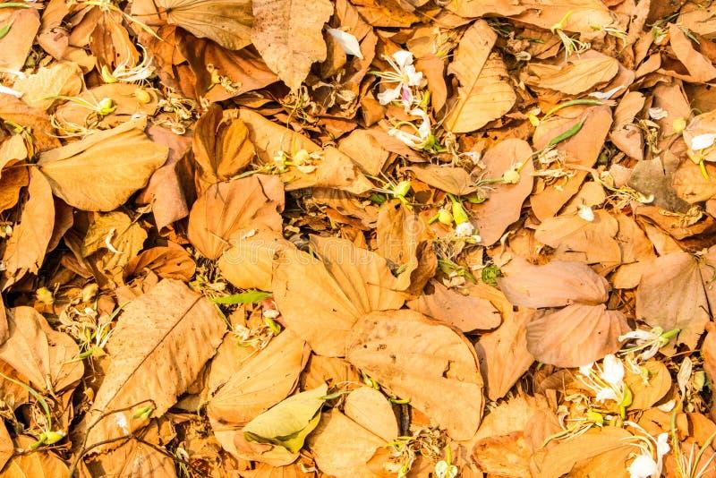 De de lentezomer stock fotografie