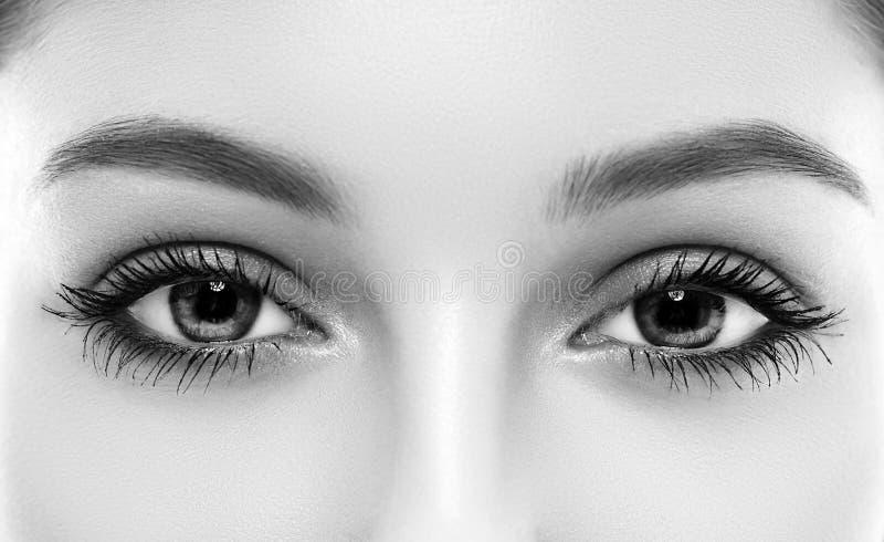 De de wenkbrauwogen van de ogenvrouw geselt zwart-wit stock foto's