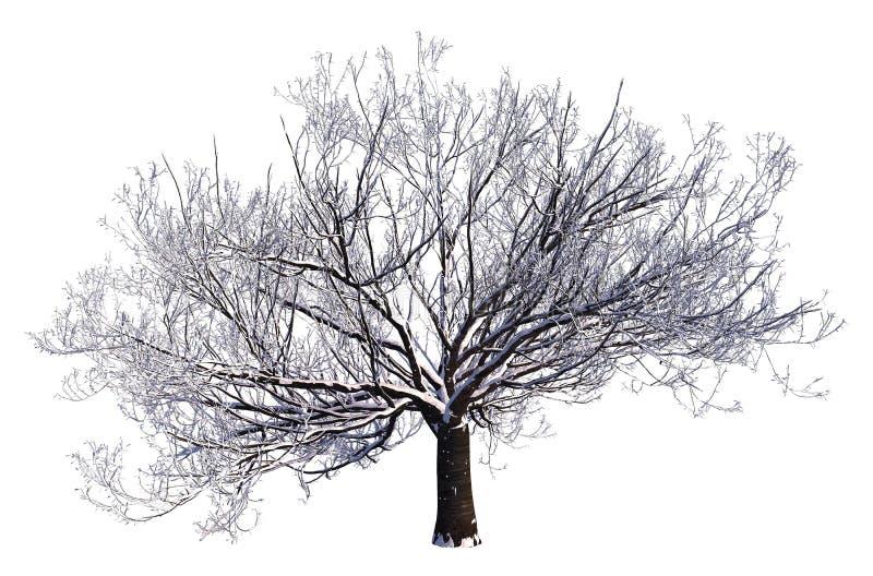 De de winterboom op Sneeuw isoleerde Witte 3D Illustratie stock foto's