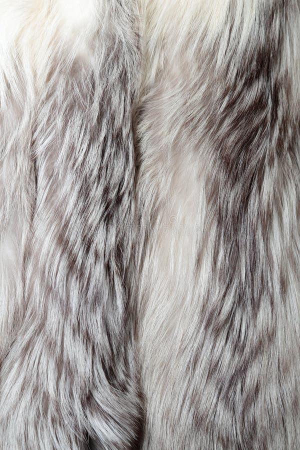De de witte textuur of achtergrond van het vosbont royalty-vrije stock foto's