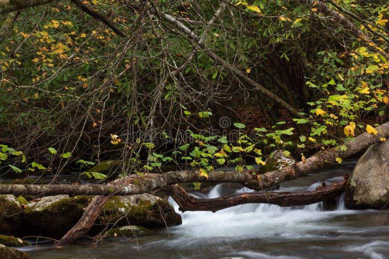 De Deadfallbomen over mos behandelden rotsen en meeslepende bergstroom in de herfst, Great Smoky Mountains royalty-vrije stock afbeeldingen