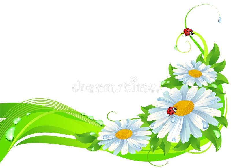 De decoratie van Daisy vector illustratie