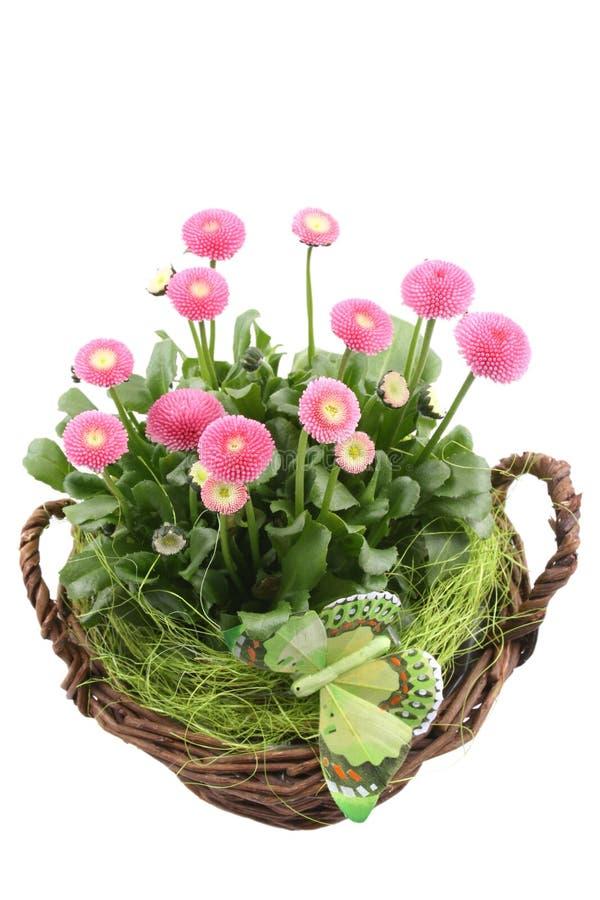 De decoratie van de lente royalty-vrije stock foto's