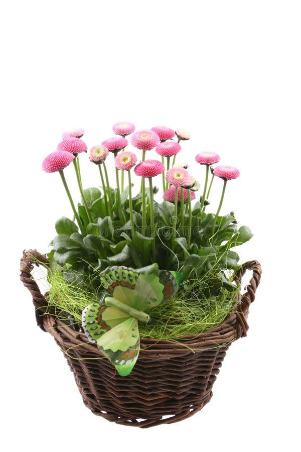 De decoratie van de lente stock afbeelding