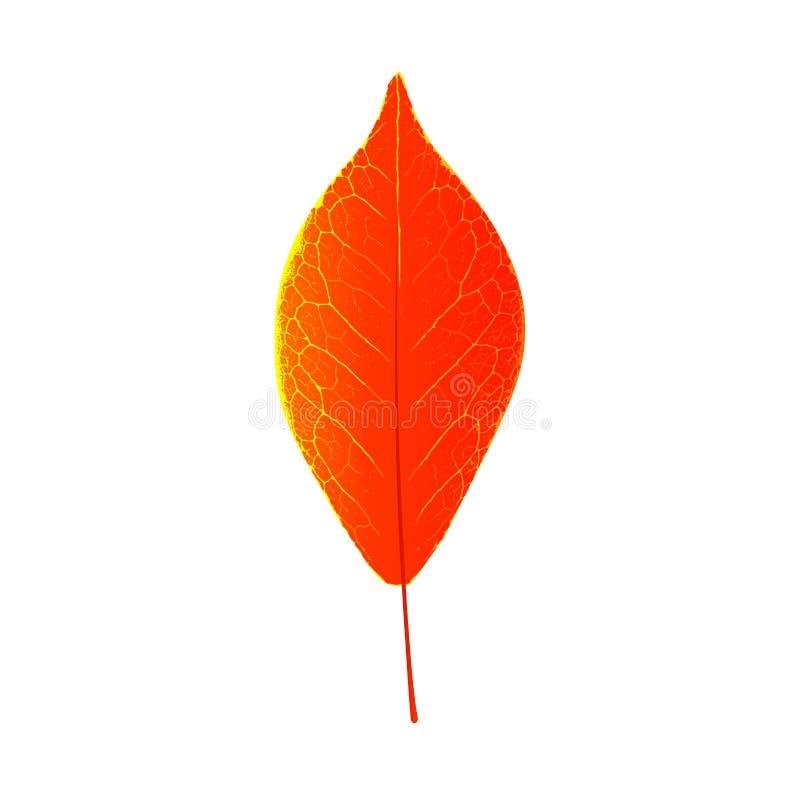 De decoratie van het de herfstblad natuurlijk seizoengebonden kleurrijk element als achtergrond De grafische vectorverkoop van de vector illustratie