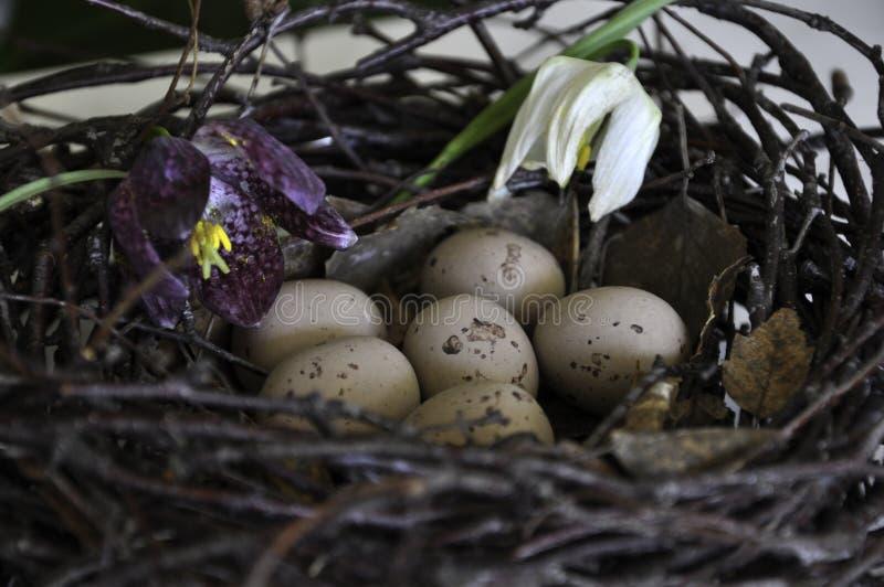 De decoratie van Pasen van het vogelnest met bloemen royalty-vrije stock foto