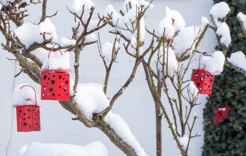 De decoratieve rode lantaarns met harten op een sneeuw behandelden toenamen struik in de winter stock afbeelding