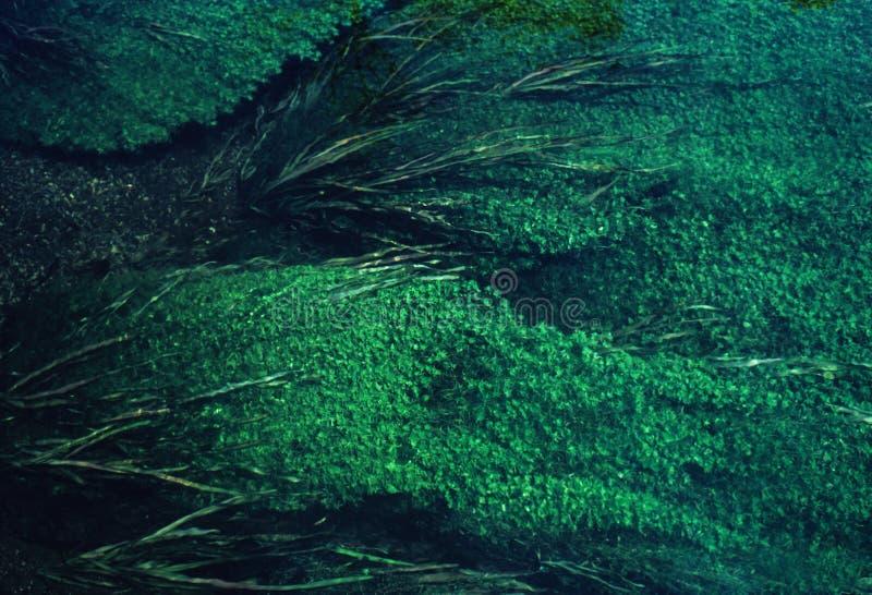 De dekking van algen royalty-vrije stock afbeelding
