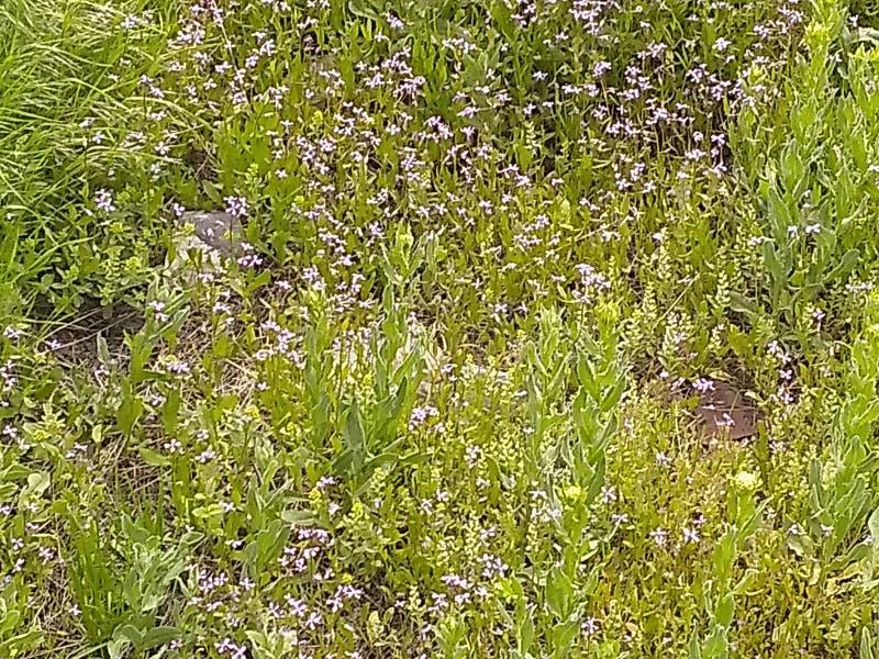 De dekking van het grasonkruid stock foto