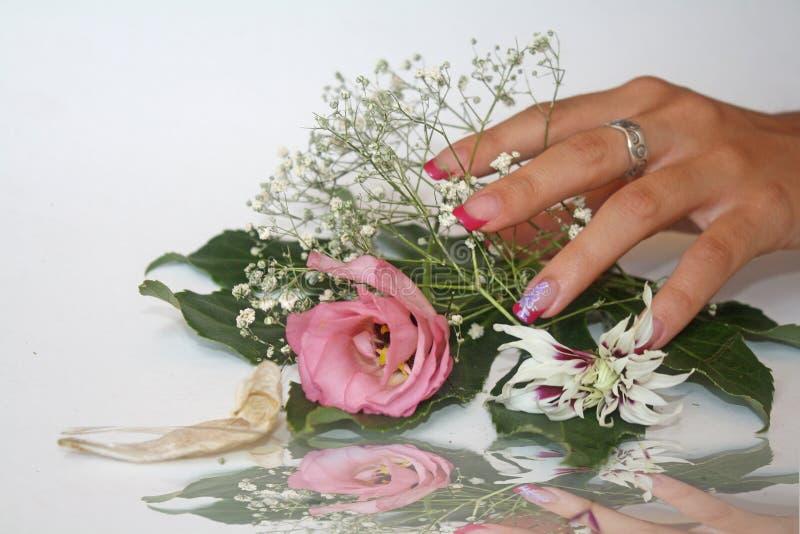 De delicatesse van de bloemen stock fotografie
