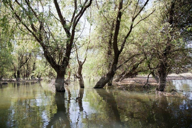 De Delta van Donau royalty-vrije stock foto's