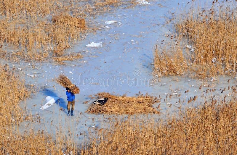 De delta van Donau in de winter royalty-vrije stock afbeelding
