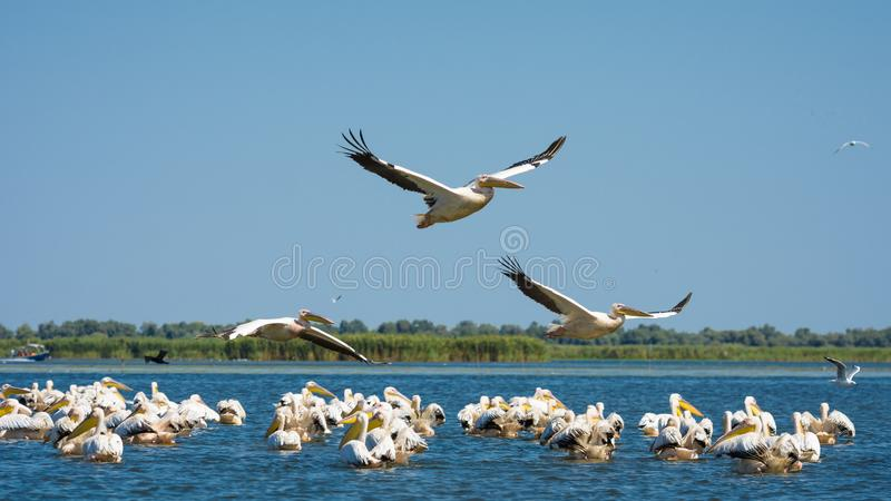 De Delta van Donau - Europese Reisbestemming stock foto