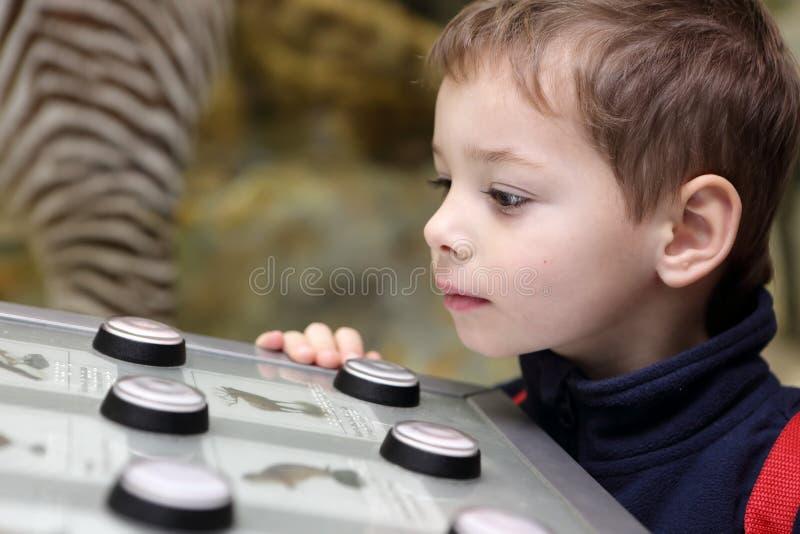 De denkende jongen die birdsong bestuderen stock foto's
