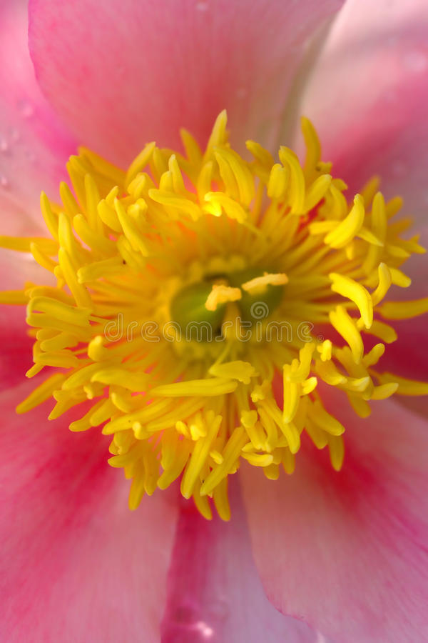 De details van de bloem stock afbeeldingen