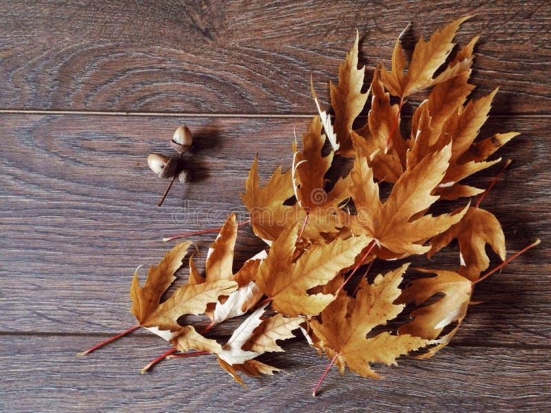 De details van de herfst ideal voor verfraait het huis of het bureau royalty-vrije stock afbeeldingen