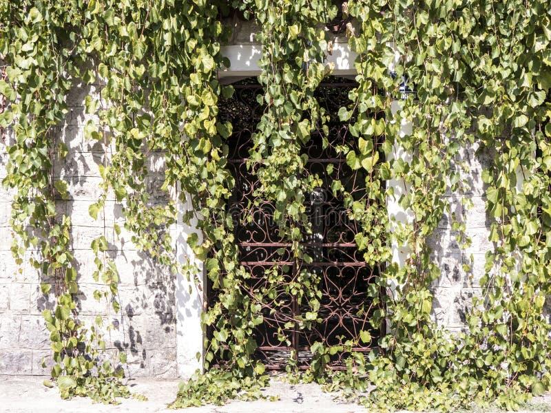 De deur van het klimopmetaal in de muur vooraanzicht van het steenblok stock afbeeldingen