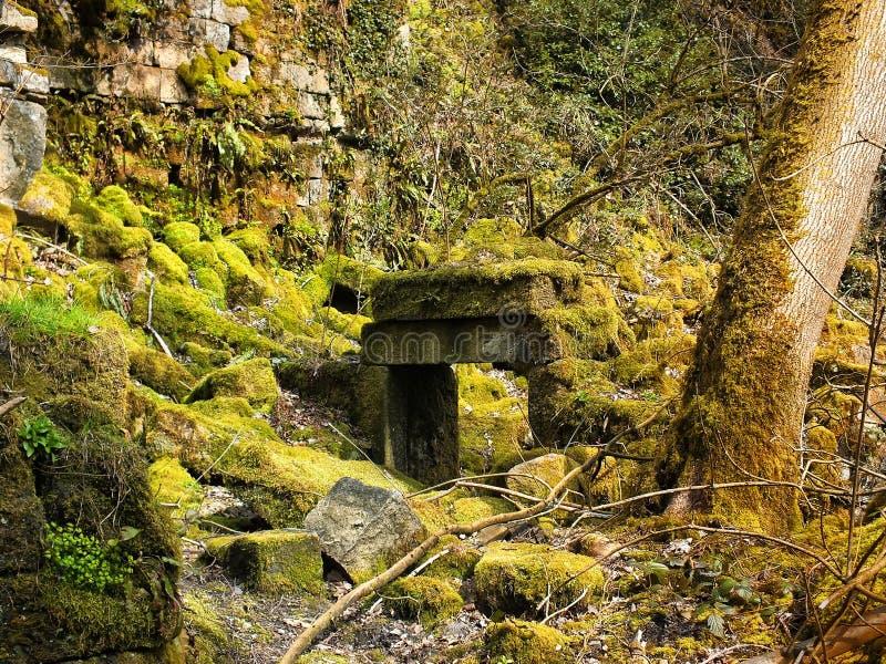 De deuropening van een geruïneerd die huis in mos in bos met verspreide stenen van de muren wordt behandeld stock foto