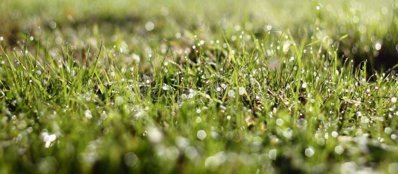 De diamanten van de waterdaling in gras stock afbeelding