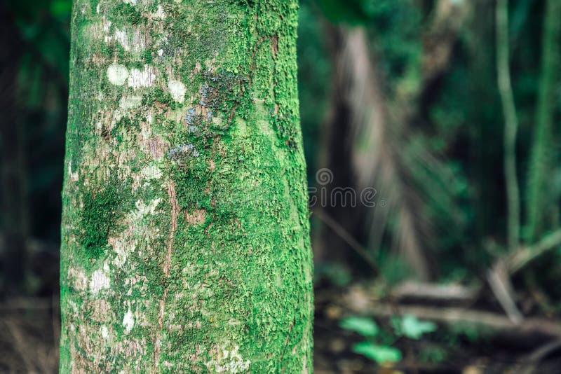 De dichte mening van de palmboomstam in tropisch bos van Oahu royalty-vrije stock fotografie