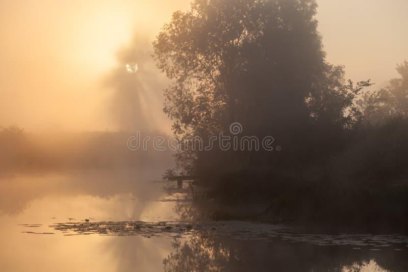 De dichte mist van het de zomerlandschap in het eiken bosje royalty-vrije stock fotografie