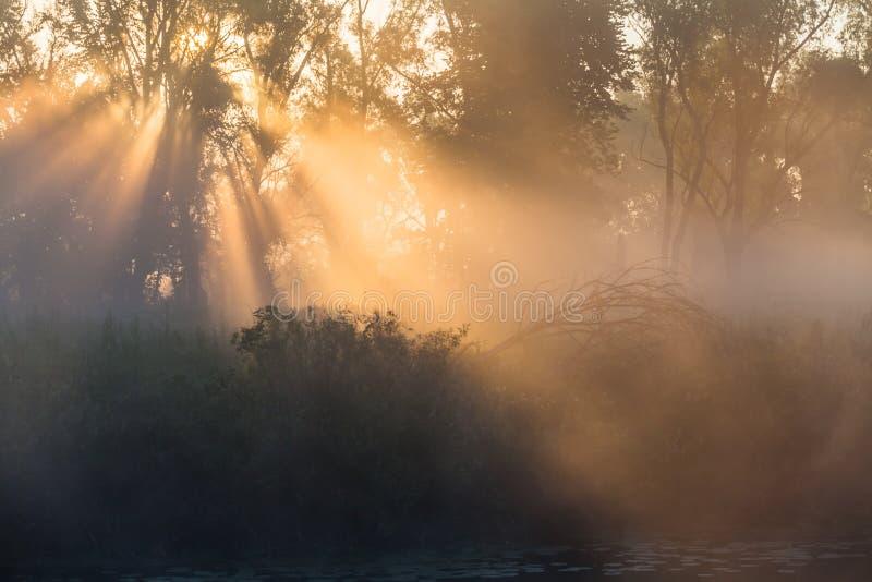 De dichte mist van het de zomerlandschap in het eiken bosje royalty-vrije stock afbeelding