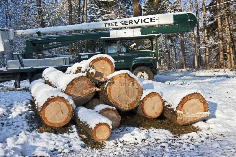De dienst van de boom stock afbeeldingen