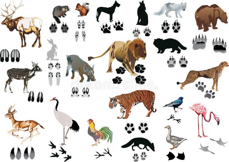 De dieren en de sporen van de kleur royalty-vrije illustratie