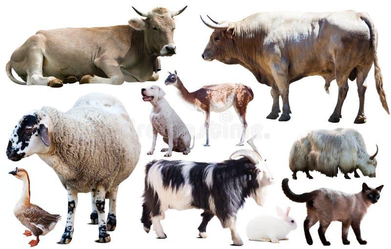 De dieren van het inzamelingslandbouwbedrijf royalty-vrije stock afbeeldingen