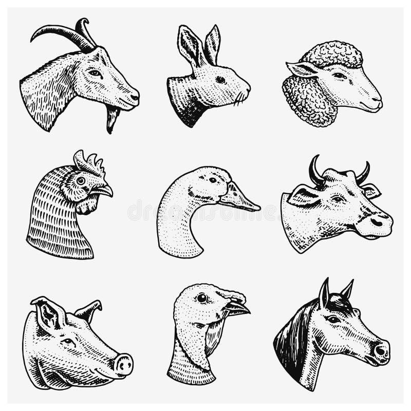 De dieren van het landbouwbedrijf Hoofd van een binnenlands van de de geitkoe van het paardvarken van de de alpacalama het konijn vector illustratie