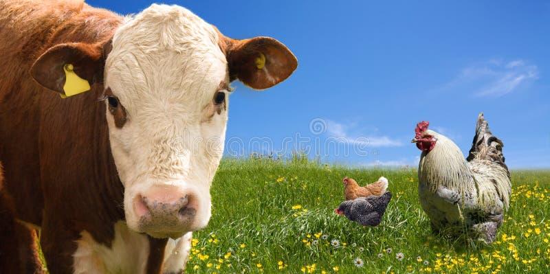 De dieren van het landbouwbedrijf op groen gebied stock afbeelding
