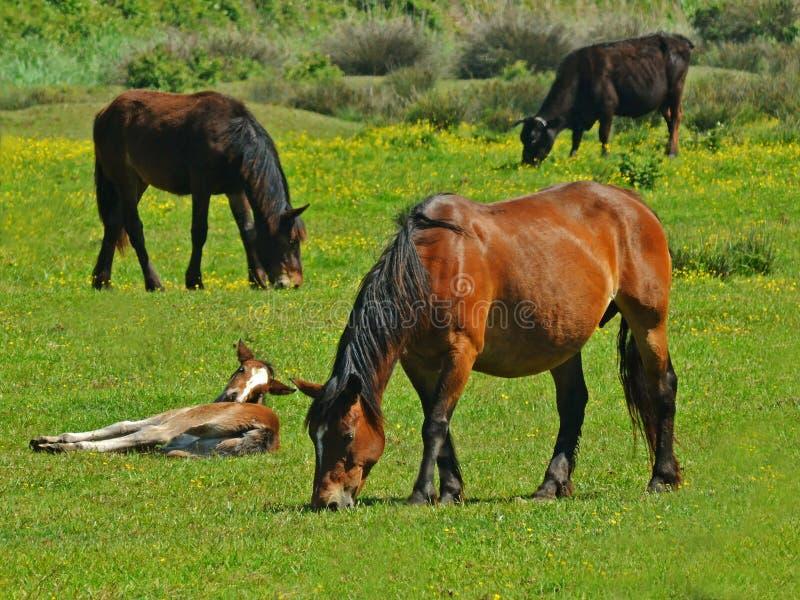 De dieren van landbouwbedrijven royalty-vrije stock foto's