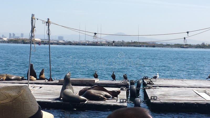 De dieren van San Diego royalty-vrije stock afbeeldingen