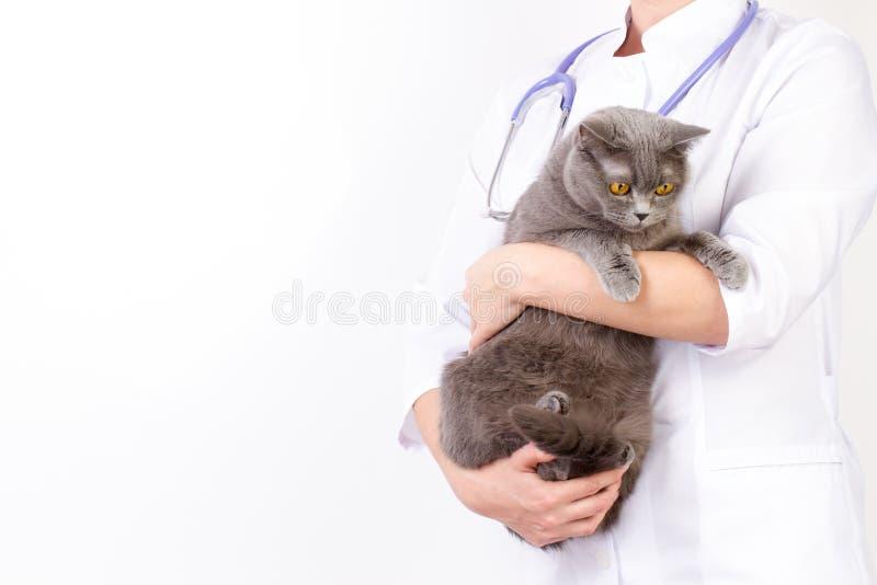 De dierenarts houdt een kat in haar wapens royalty-vrije stock afbeeldingen
