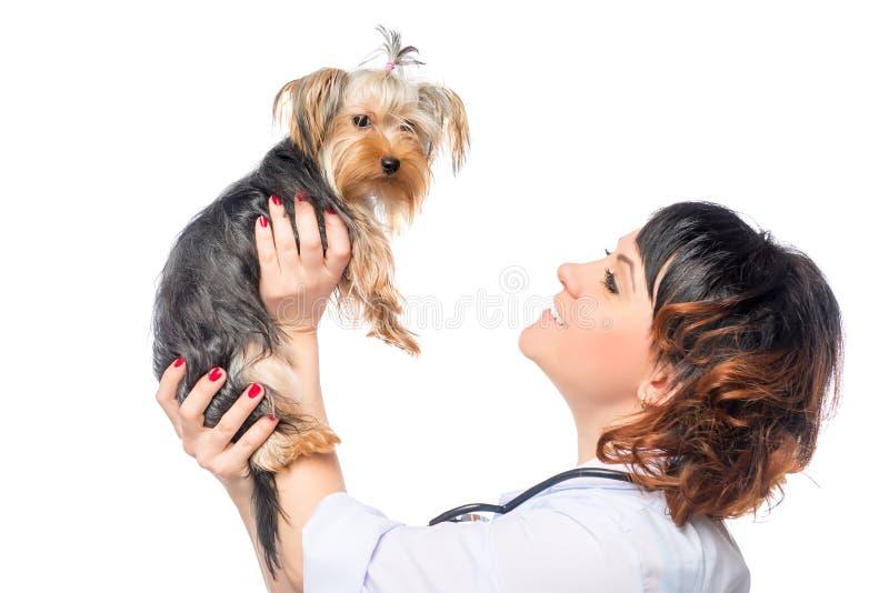 De dierenarts houdt een mooie gezonde hond stock fotografie