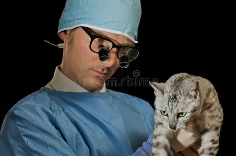 De dierenarts onderzoekt kat stock fotografie