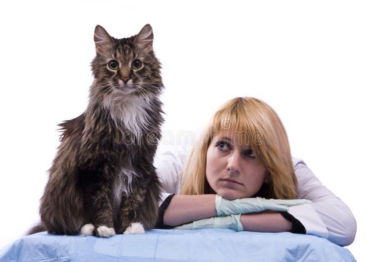 De dierenarts voelt droefheid en kijkt dakloze kat stock foto's