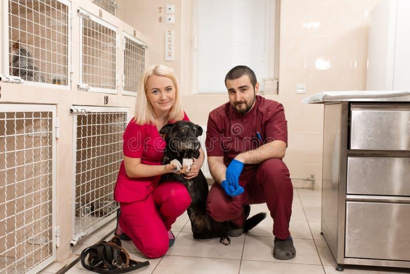 De dierenartsen onderzoeken schuwe hond in het dierlijke ziekenhuis stock afbeeldingen