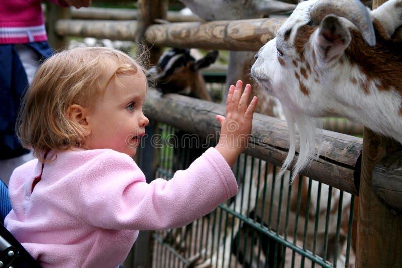 In de dierentuin royalty-vrije stock afbeelding
