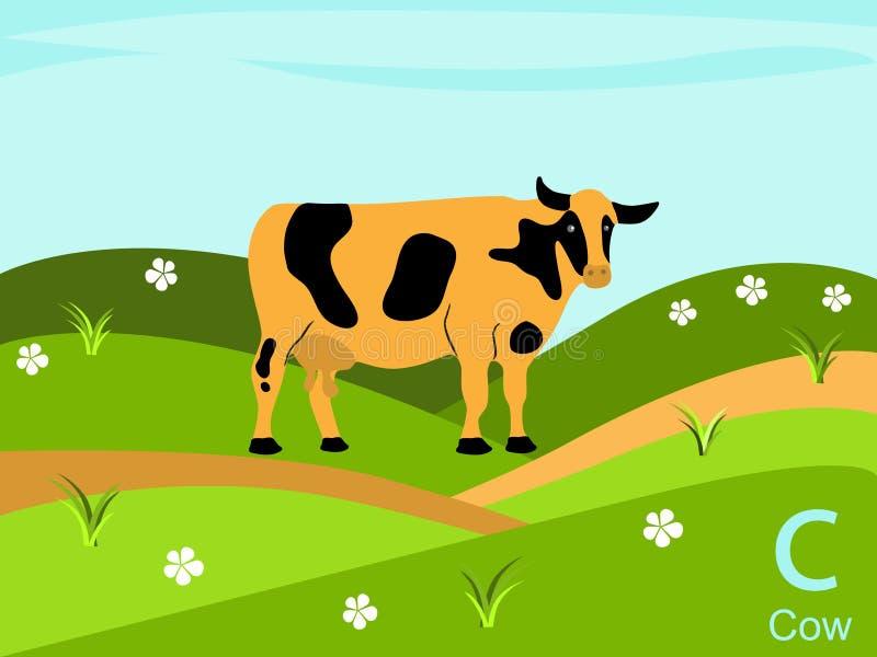 De dierlijke kaart van de alfabetflits, C voor koe royalty-vrije illustratie