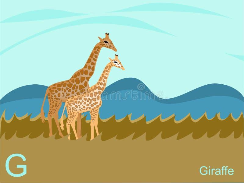 De dierlijke kaart van de alfabetflits, G voor giraf royalty-vrije illustratie