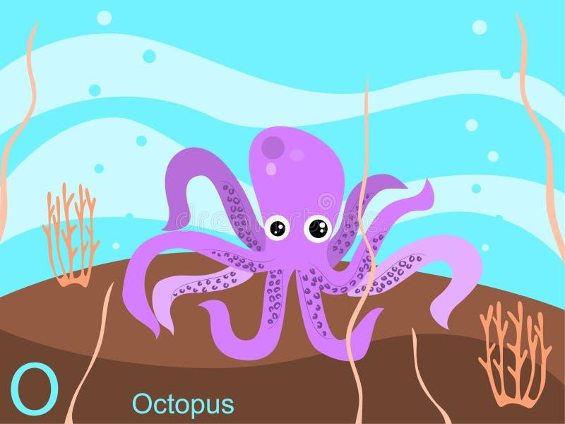 De dierlijke kaart van de alfabetflits, O voor octopus royalty-vrije illustratie