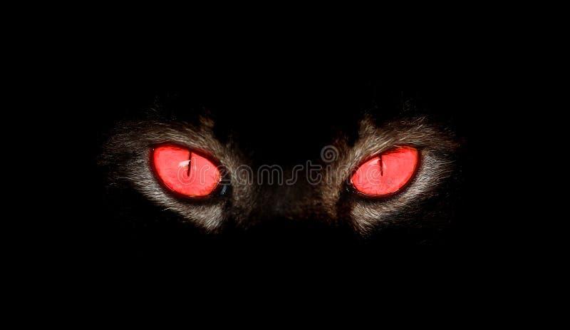 De dierlijke ogen staren bij iets in zwarte stock foto