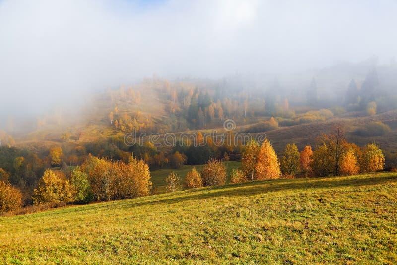 De dikke mist behandelde de vallei, bos Majestueus de herfstlandschap Berk met oranje bladeren en gouden gras Karpatische plaats royalty-vrije stock afbeelding