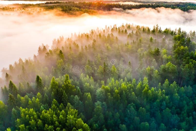 De dikke mist behandelt groen bos op heldere ochtend, luchtlandschap Verbazend landschap stock foto
