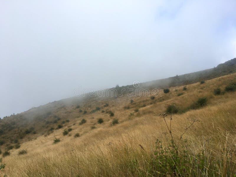 De dikke weide van het de pas droge gras van het mistonweer op de berg royalty-vrije stock afbeelding