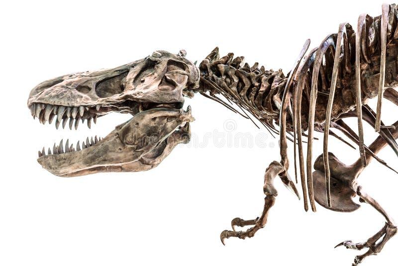 De Dinosaurusskelet van tyrannosaurusrex t-Rex royalty-vrije stock afbeelding