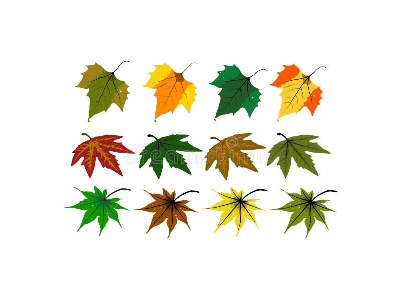 De diverse soorten bladeren royalty-vrije illustratie