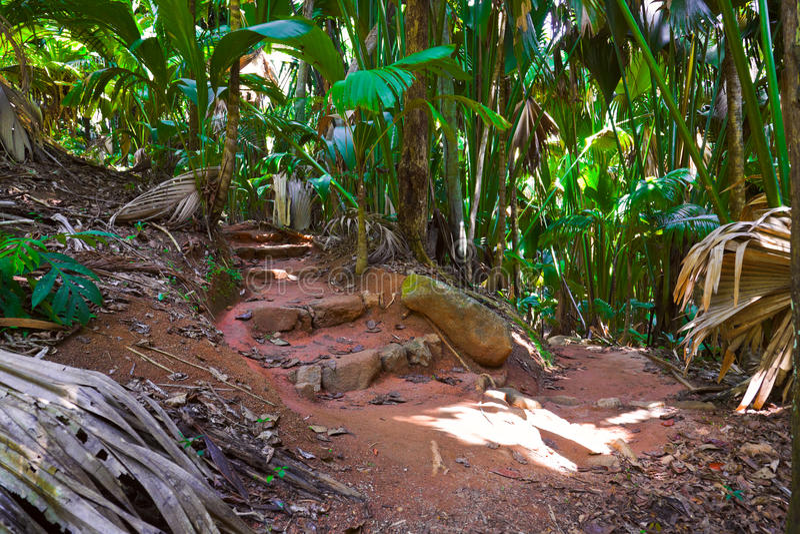 de djungel mai banaseychelles vallee arkivbild