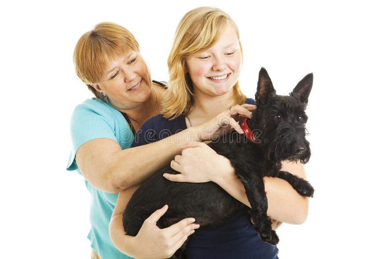 De Dochter en de Hond van de moeder stock afbeeldingen